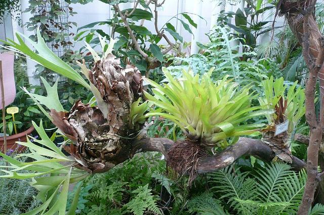 Šie augalai auga ant medžių, iš oro gaudami drėgmę